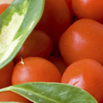 Tomatoes : Grape and Cherry
