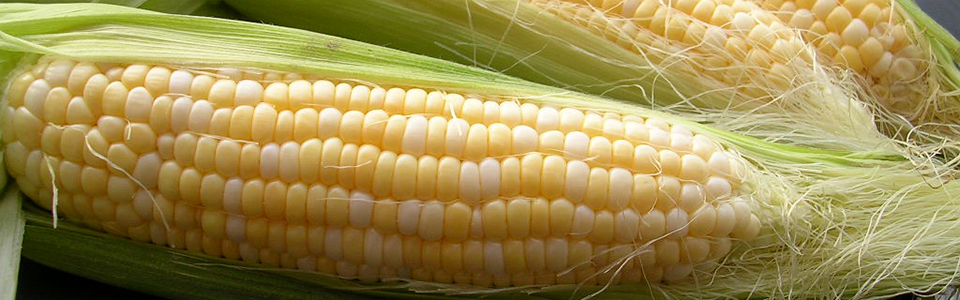 Our Famous Sweet Corn – Now Available!