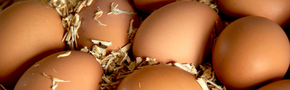 Brown Eggs : Farm Fresh, Free Run
