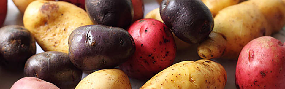 Potatoes : Six Varieties
