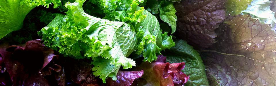 Mustard Greens: 3 Different Varieties